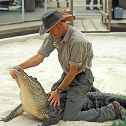 Gatorland, Things to do in Florida