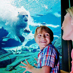SeaWorld Orlando, Things to do in Orlando